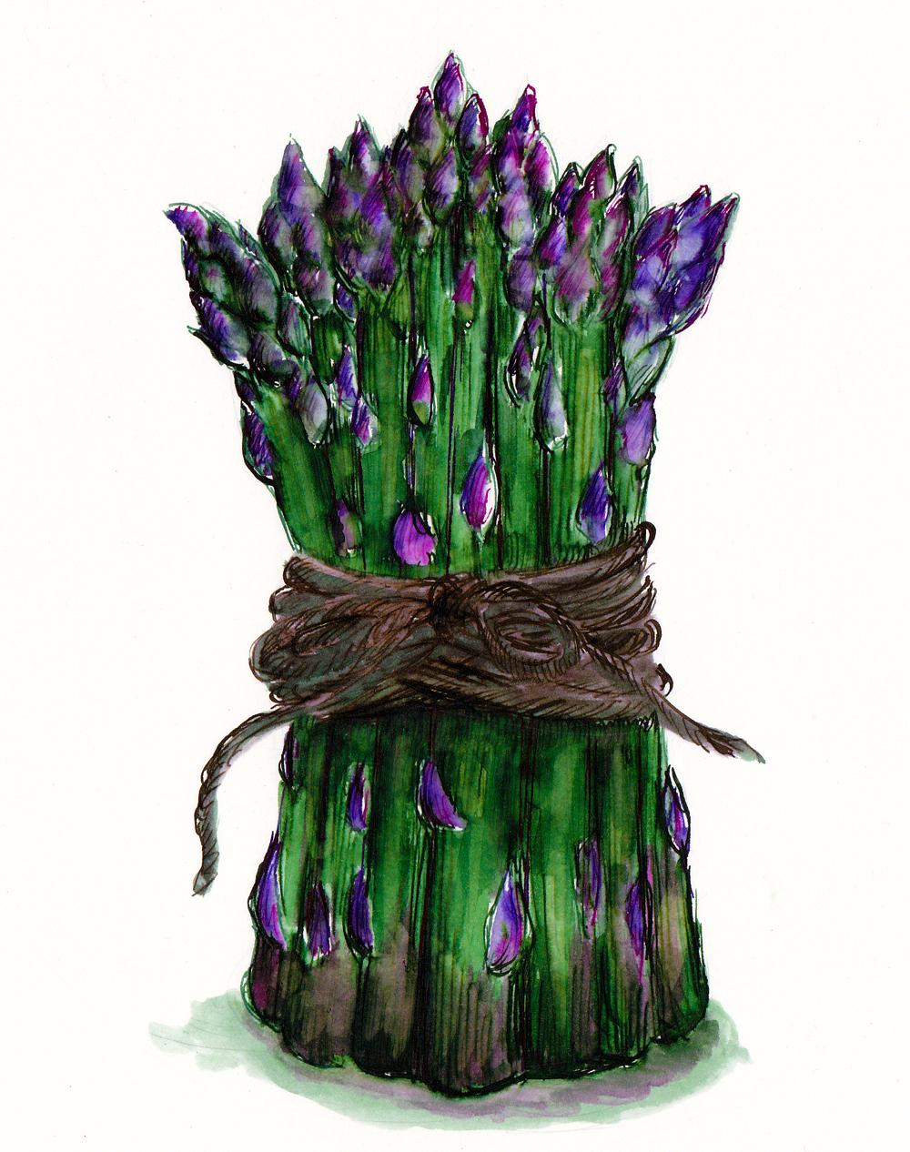 <b>Asparagus</b>