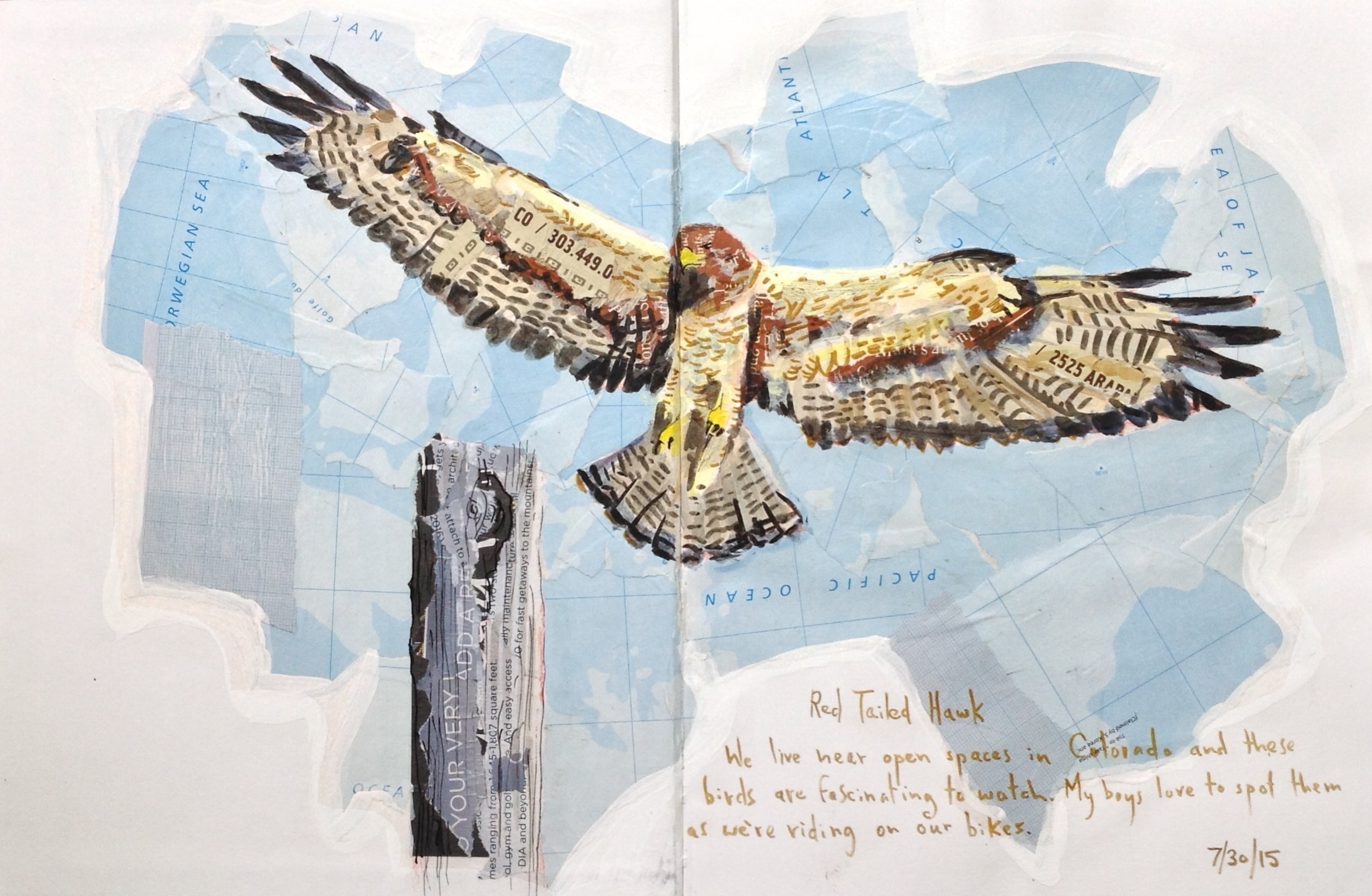 <b>Red-tailed Hawk</b>