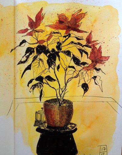 <b>Australia Poinsettia</b>