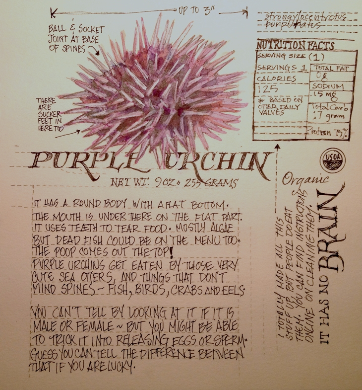 <b>A Purple Urchin</b>