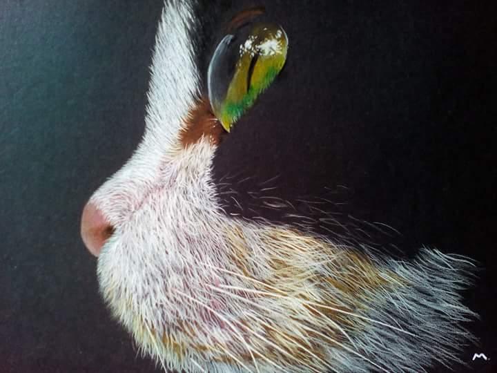 <b>Cat's Eye</b>