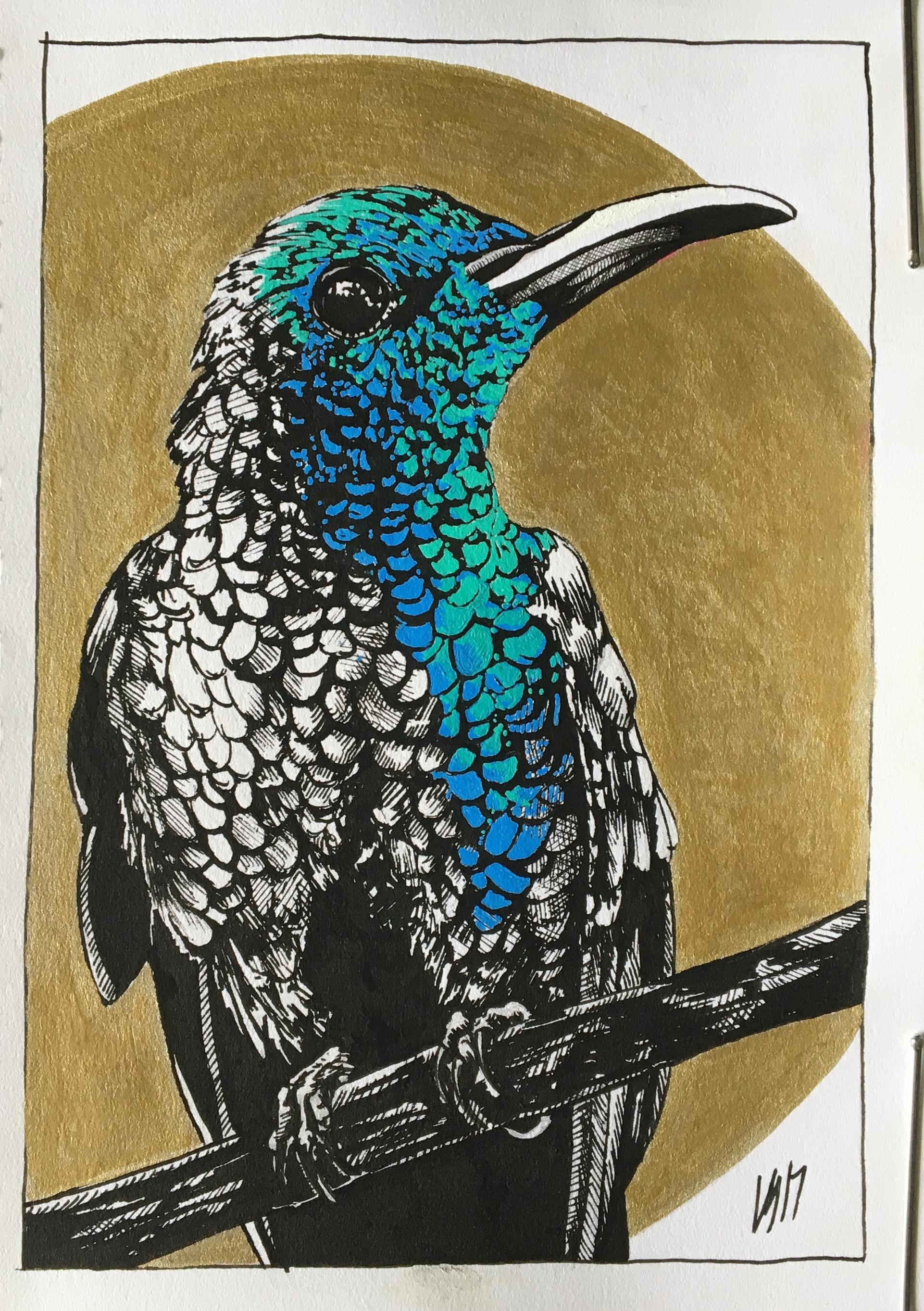 <b>Hummingbird Study</b>