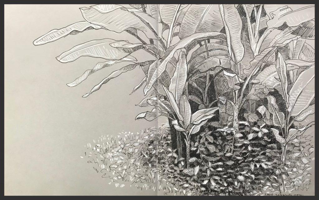 <b>Banana Plant</b>