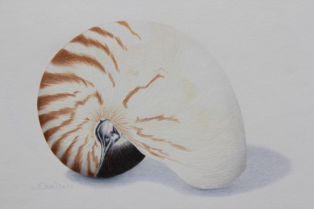 <b>Nautilus Shell</b>