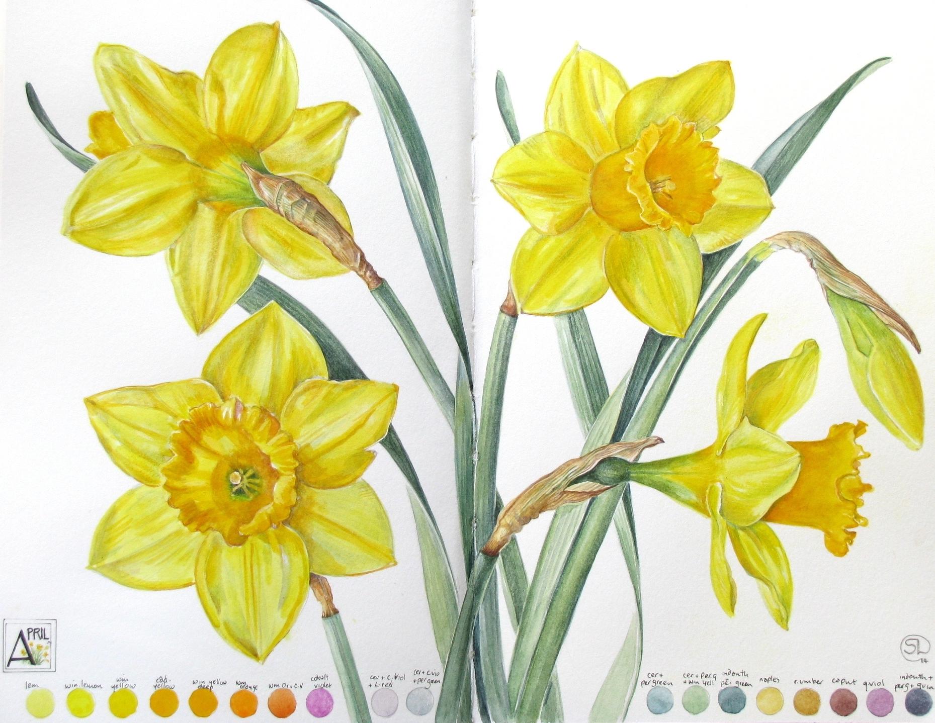 <b>Daffodil Days</b>