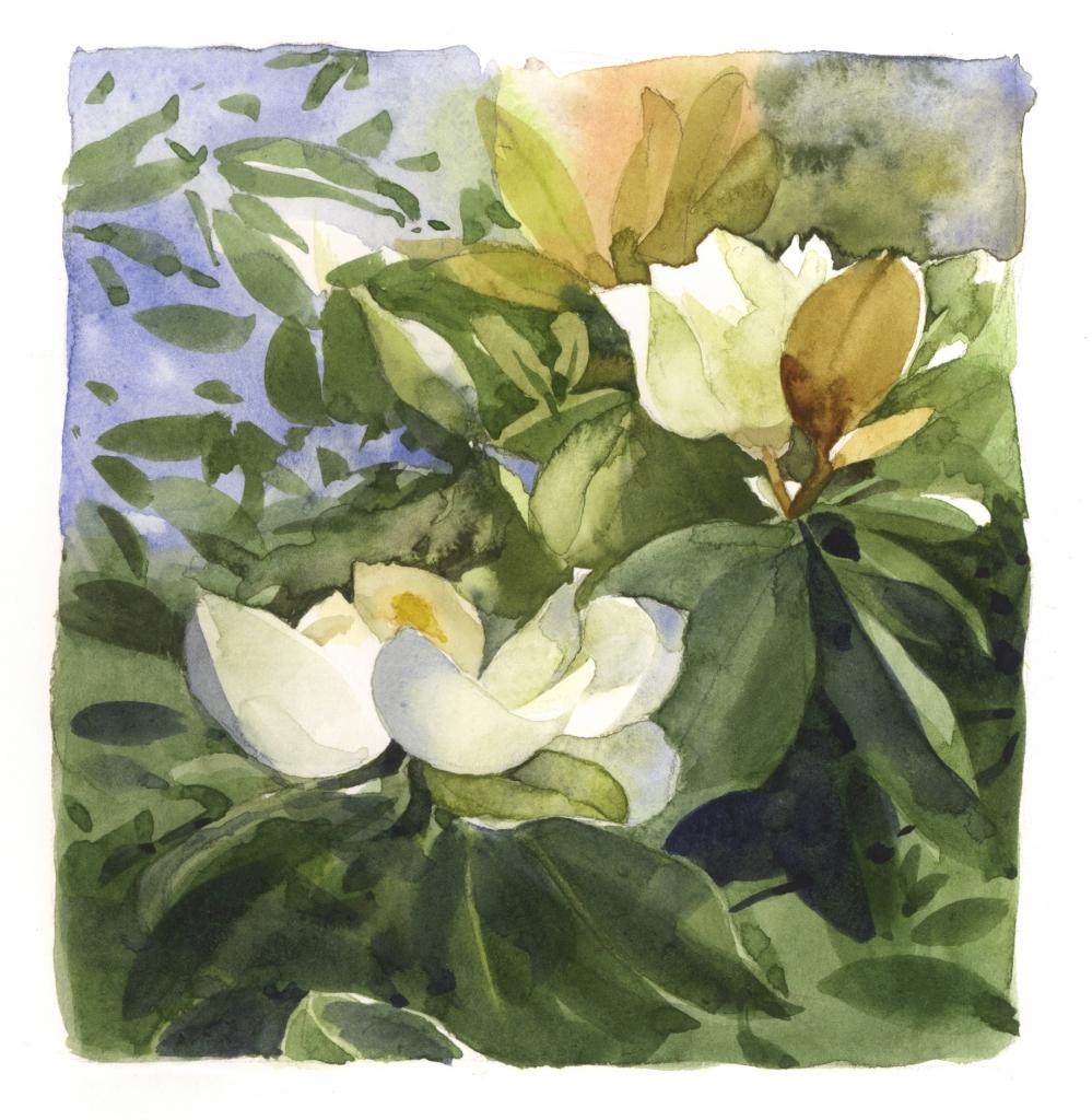 <b>New Orleans Magnolias</b>