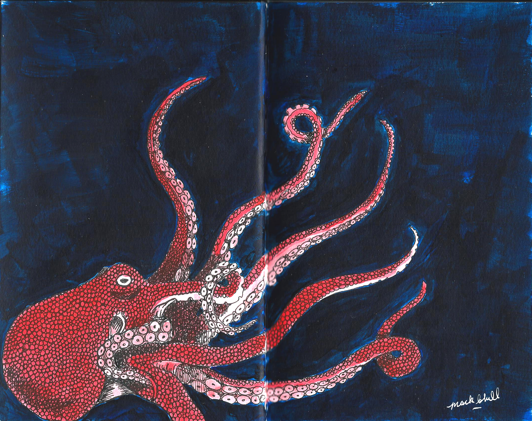 <b>A Red Octopus</b>