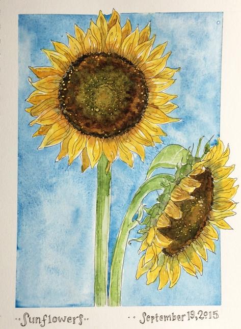 <b>Sunflowers</b>