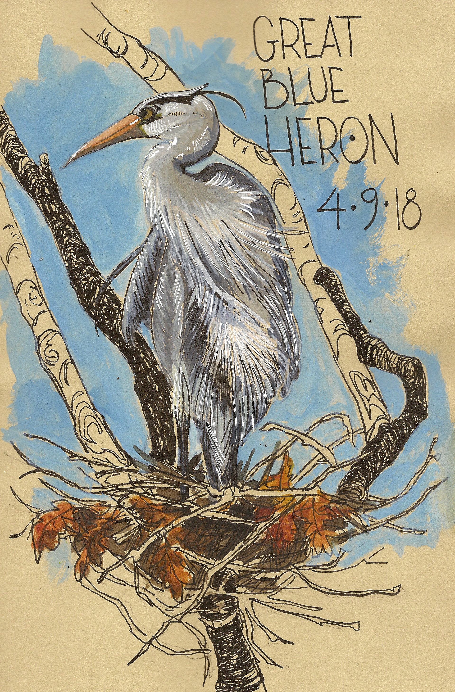 <b>Great Blue Heron</b>