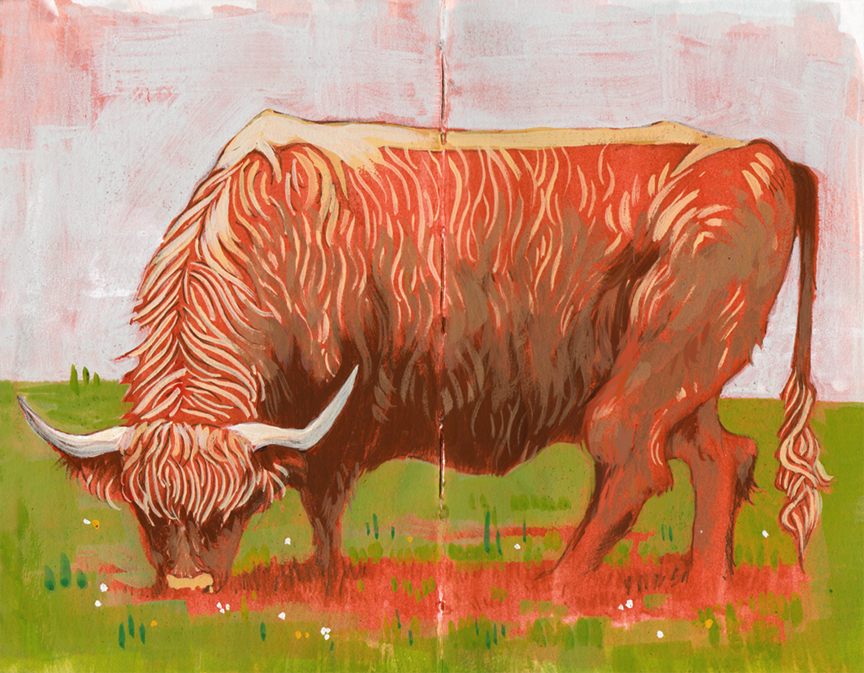 <b>Highland Cattle</b>