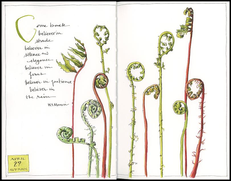 <b>Unfurling Ferns</b>
